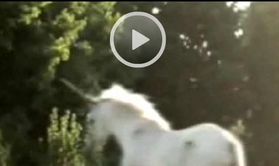 Une licorne a été vu en Ontario
