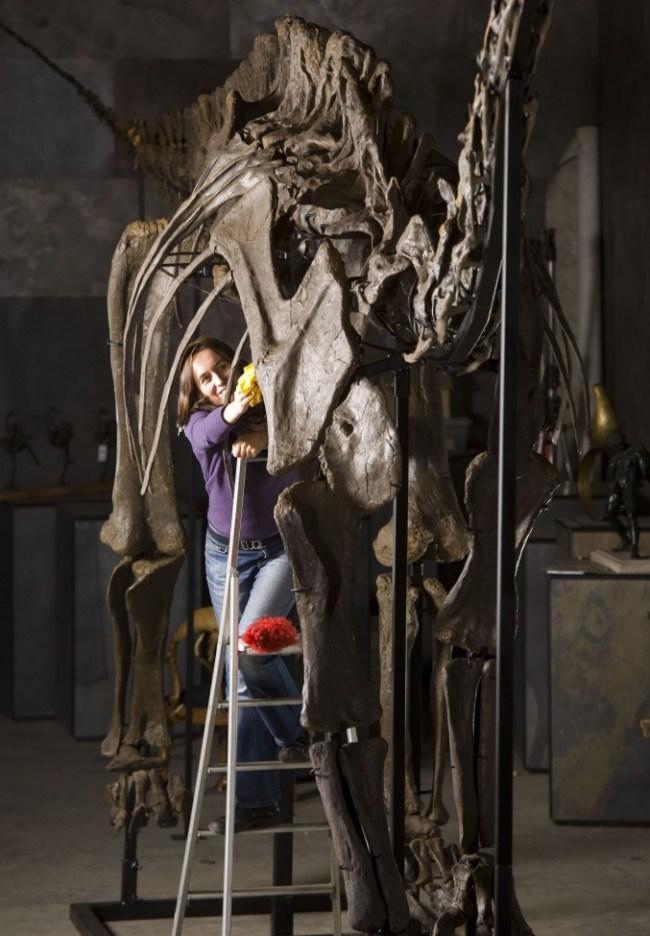 Squelette Diplodocus