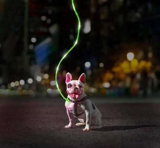laisse chien illuminé