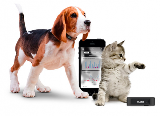 pet-activity-tracker