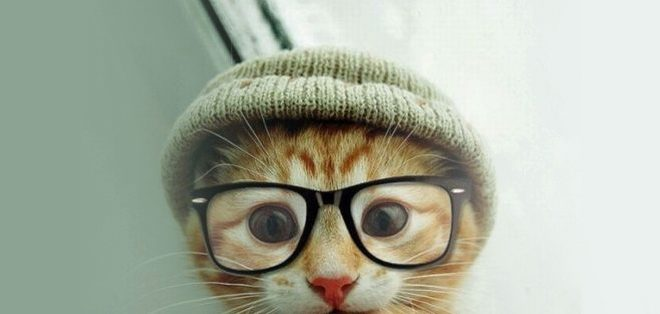 chat lunette tuque