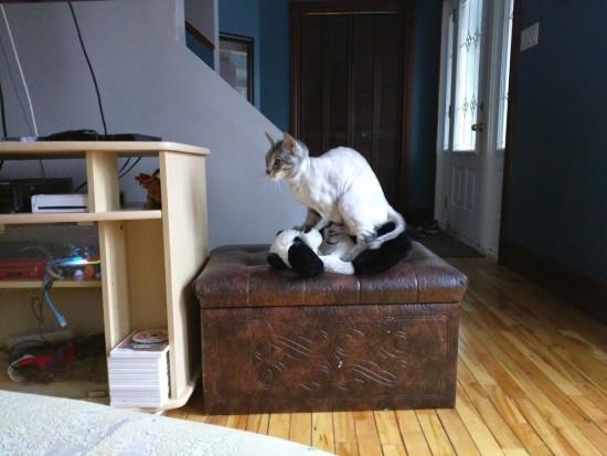 Photo de chat prise avec le Nexus 6