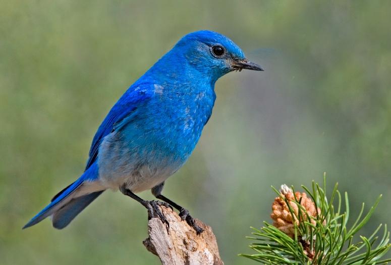 La reconnaissance de marque de Twitter derrière le logo de l'oiseau bleu est immédiate pour une grande majorité d'internautes. Par contre, peu arrivent à définir la fonction de la plateforme. Image: Elaine R. Wilson