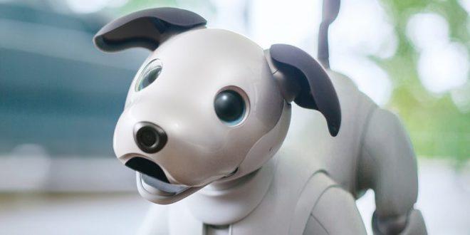Votre futur compagnon: Aibo le chien-robot de Sony!