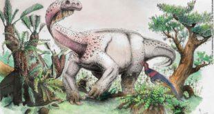 Nouvelle espèce dinosaure